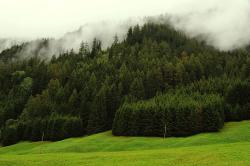 s-trees-clouds-swiss-alps-1719-k64-a