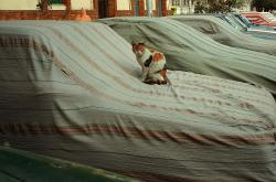 Cat on covered car